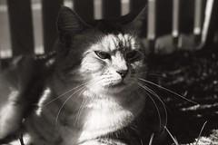 doris_13 (yanchep_mike) Tags: polypanf canon eos5 cat
