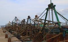 The trawling fleet Mandapam (RossCunningham183) Tags: india southindia tamilnadu trawlers mandapam fishing boats