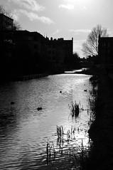 Along the Canal (magaroonie) Tags: unioncanal edinburgh 7daysofshooting week46 silhouette blackandwhitewednesday