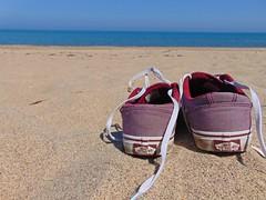 Beach and Dairy Farm 25/5/17 (emily.morison) Tags: beach shoes trainers vans skate sand sea seaside dairy cow calf calves ice cream warkworth barn animal nature