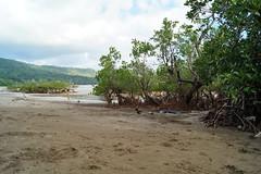 Plage, mangrove et saleté (Jan-Guy) Tags: saleté polution mayotte