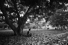 Inner Peace! (Ramesh Adkoli) Tags: landscape lalbagh bw blackwhite d800e capturenx