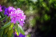 Spring (kinga.lubawa) Tags: spring flower flowers kwiaty kwiat kolory kolorowe colors