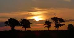 CUANDO CAE EL DIA (kchocachorro) Tags: photography phothographer nature atardecer sun sunset fotografia fotografo naturaleza naturephoto naturephotography campo horizon horizonte paisaje landscape