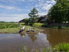 Bezoekerscentrum Reitdiep van Het Groninger Landschap (Jeroen Hillenga) Tags: reitdiep hetgroningerlandschap groningen landschap bezoekerscentrum debuitenplaats netherlands nederland