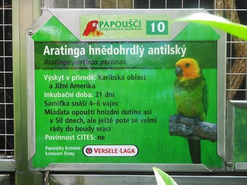 Bošovice - papouščí zoo - Arantiga hnědohrdlý antilský