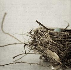 (donna leitch) Tags: stilllife bird egg nest overlay texture naturamorta