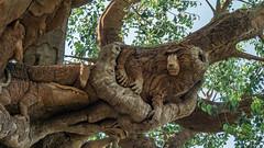 P5140509.jpg (KevinM43) Tags: animalkingdom treeoflife carving
