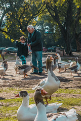 please do not feed the animals (nicolászárate) Tags: kid grandpa ducks feed animals bosques de palermo buenosaires