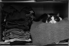 ¡Hola! (Egg2704) Tags: tola gato gatos felino felinos animal animales animalia naturaleza mascota mascotas pet pets cat cats blancoynegro byn bw egg2704