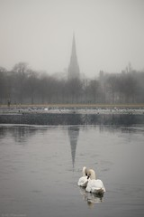 A church wedding? (Anthony P26) Tags: animalsbirdsinsects birds category england flickrpost kensingtongardens landscape london places travel capitalcity city citypark canon70d canon canon1585mm grass fog pond water swans pair couple church spire churchspire mist greysky outdoor greatbritain british britain english ice icy icywater frozen reflections reflection mirror
