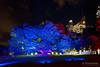 20170531-47-VIvid Light display at Sydney Botanic Gardens (Roger T Wong) Tags: 2017 australia nsw newsouthwales rogertwong sel2470z sony2470 sonya7ii sonyalpha7ii sonyfe2470mmf4zaosscarlzeissvariotessart sonyilce7m2 sydney sydneybotanicalgardens vivid festival illuminated lights night tree