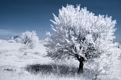 Doudou (Lolo_) Tags: infrared ir provence france tree 35mm vernegues ruins arbre plateau infrarouge white vestiges