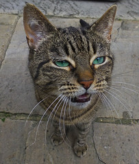 As I was saying... (ArtGordon1) Tags: greeneyes cat feline animal pet walthamstow walthamstowvillage thenagshead london england uk davegordon davidgordon daveartgordon davidagordon daveagordon artgordon1