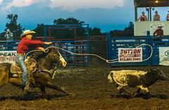 DSC_4011 (alan.forshee) Tags: rodeo horse cow ride fall buck spin twirl bull stallion boy girl barrel rope lariat mud dirt hat sombrero