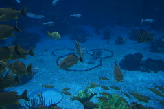 """Epcot:  Hidden Mickey at the Seas with Nemo and Friends • <a style=""""font-size:0.8em;"""" href=""""http://www.flickr.com/photos/28558260@N04/33922233104/"""" target=""""_blank"""">View on Flickr</a>"""