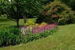 Clyne in Bloom Mid-May 2017 (10) (goweravig) Tags: flowers blooms clyne clynegardens swansea wales uk parks gardns gardens