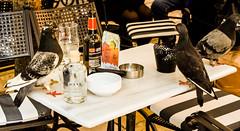 ale and pigeons (Harry McGregor) Tags: food drink corfutown corfu beer ale pigeons nikon d3300 harrymcgregor 10 2017 may cafe bar outdoor ratswithwings