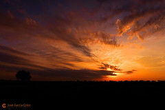 16-09-23 Uganda-Rwanda (40) Murchinson R01 (Nikobo3) Tags: áfrica uganda murchisonfallsnationalpark color paisajes amaneceres parquenacionaldecataratasmurchinson lagoalberto naturaleza nikobo joségarcíacobo canon canong7x g7x flickrtravelaward ngc