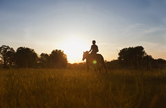 IMG_3580 (Mary Anne Morgan) Tags: horses silhouette