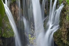 0523 Waterfall Tree (Hrvoje Simich - gaZZda) Tags: longexposition green beautiful rocks waterdrops rastoke outdoors landscape croatia europe nikon nikond750 nikkor283003556 gazzda hrvojesimich