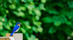 DSC00562processed3 (onbreadalonetp123) Tags: bird southcarolina