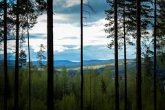 Ut ur skogens djup mot Ljungans dalgång (Annica Spjuth) Tags: djup fotosondag fs170528 medelpad dalar berg utsikt skog