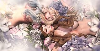 Sleeping fairies