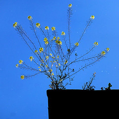 Roof Edge, Córdoba, Spain (pom.angers) Tags: córdoba panasonicdmctz30 april 2017 andalusia andalucìa españa spain flower flowers sky roof europeanunion 100 150