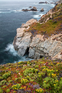 Flowers on the Granite Shores