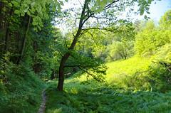 Im Sellnitzgrund (Veit Schagow) Tags: rathen prossen waltersdorf sellnitzgrund wald wanderung rundwanderweg elbsandsteingebirge rundwanderung wanderweg