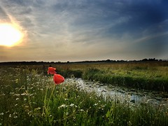 Typical Dutch Landscape. (Jaco Verheul) Tags: sky flower poppy poppies sunset dusk serene jaco verheul landscape water waterscape cloud phonephoto samsung s7