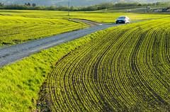 Rural landscape (harald.bohn) Tags: landskap landscape grønt vår green spring vei road norway trøndelag norge tesla car bil lysegrønt spirende jorde linjer