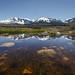 Mono Basin Vernal Pool
