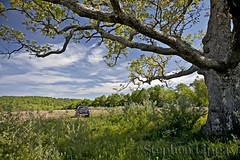 The meditation tree (slippay) Tags: trees meditation tree oak field hiking jersey newjersey delewarewatergap wallpack worthington state forest worthingtonstateforest