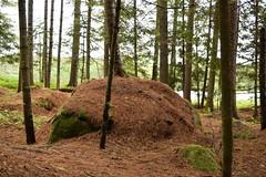 Adirondack - Forked Lake (sabrinagranger1) Tags: sprucetree forkedlake adirondack nature forrest tree