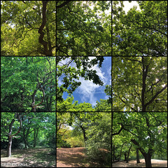 Hole In The Middle (peterphotographic) Tags: photo160520171151131edwm holeinthemiddle apple iphone 6s square ©peterhall gridpic hollowponds wanstead snaresbrook walthamstow eastlondon eppingforest london england uk britain tree joiner hockney hockneyesque art sun bluesky wood forest hole