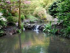 Clyne in Bloom Mid-May 2017 (4) (goweravig) Tags: clynegardens clyne flowers azaleas rhododendrons blooms swansea wales uk mayals parks gardens pond stream