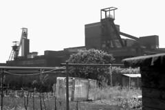 Schlägel & Eisen (hilgers1944) Tags: schlägeleisen zecheschlägeleisen bergwerkschlägeleisen herten recklinghausen ruhrgebiet ruhrrevier ruhrarea ruhrpott kohlenpott schachtanlage zeche steinkohlenzeche steinkohlenbergwerk steinkohlenbergbau bergwerk bergbau pütt fördergerüst förderturm mine mining coal coalmine coalmining shaft pit pithead headgear headframe colliery collieries mineheads mineshaft mineshaftheadgear charbon charnonnage chevalement minesdecharbon puitsdemine chevalementminedecharbon chevalementpuitsdemine chevalementdemine miningheritage industrialheritage industrialhistory miningengineering fosse kopalnia szyb dul old history blackandwhite sw bw blackwhite industry industrie industria industrialdecay postindustrial endofindustry abandoned urbex oldpicture autoremovedfrom1to5faves bfv25 topf25