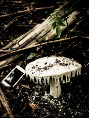 "Massive Amanita farinacea • <a style=""font-size:0.8em;"" href=""http://www.flickr.com/photos/44919156@N00/34662862261/"" target=""_blank"">View on Flickr</a>"