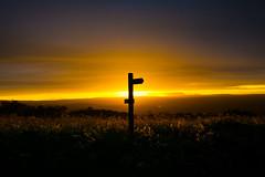 Holding onto Buckle Belts (iratebadger) Tags: nikon nikond7100 nature sky silhouette shadows sunset solitary sun sundown sunlight summer