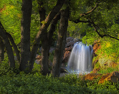 Waterfall and Oak Trees (Utah Images - Douglas Pulsipher) Tags: scenery scenic location nature natural photo photos photosof photograph photographs photography stockphoto image images imagery picture pictures travel tourism touristattraction view views redbuttegarden redbuttegardens botanical botanicalgarden universityofutah saltlakecity utah arboretum garden gardening gardens trees plants flowers landscaping landscaped summer evening afternoon childrensgarden waterfall waterfalls cascade cascades stream streams flowing water pond lake waterfeature landscape oak oaktrees grove forest gambeloak scruboak