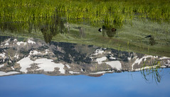 Morning Stillness (Frank McNamara) Tags: ducks water reflection nps yellowstone peaceful calm quiet nationalpark droh