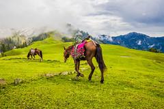 Favorite Pic of Paye Meadows (mimalkera) Tags: kaghanvalley naran kaghan shogran siripaye payemeadows lakesaifulmalook travelpakistan travelbeautifulpakistan travel wanderlust