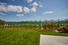 IMG_7610 (Boobo_oobo) Tags: canon 6d vinski vrh zagorje vine tasting bbq hangout holliday viksa vikendica klet trsje vinograd vino