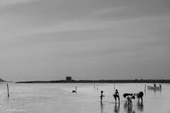 A Marceddì di martedì (SaraMeloniClick) Tags: marceddì sardegna stagno pescatore pesca vongole