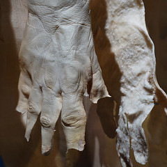 Fits Like a Glove (Seeing Visions) Tags: 2017 unitedstates us california ca losangeles la expositionpark californiasciencecenter exhibitbodyworldspulse plastination humanremains gunthervonhagens skin skinned hands male square raymondfujioka