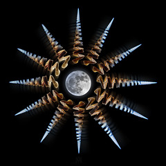 the Moon's pull (marianna_a.) Tags: shell spiral conical sharp pointy hollow full moon composite psd mariannaarmata p1290874