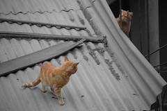 2 cats looking at (RaphelOV) Tags: gatos color selectivo