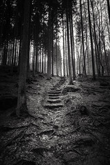 Stairs, roots and trees (lja_photo) Tags: woods trees roots nature photography landscape light natural hike germay irrel stairs contrast dramatic exploration exposure woodland wood outdoors white monochrome monotone monoart moody black blackandwhite bw bnw blackandwhitephoto backlight rocks stone leaves